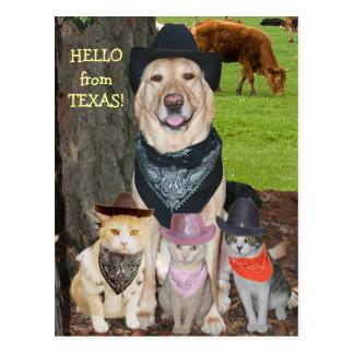 こんにちはテキサス州から! ポストカード