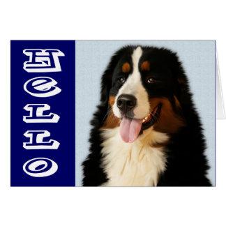 こんにちはバーニーズ・マウンテン・ドッグの小犬のメッセージカード カード