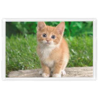 """""""こんにちは""""子猫の虚栄心の皿 アクリルトレー"""