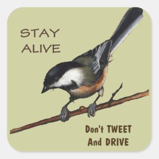 さえずらないで下さい及び運転しないで下さい: 鳥: 色の鉛筆の芸術 スクエアシール