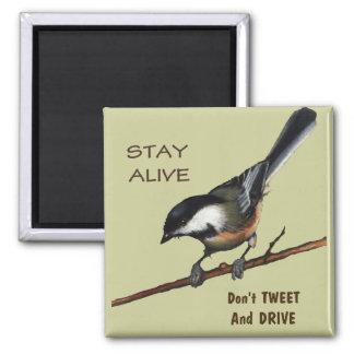 さえずらないで下さい及び運転しないで下さい: 鳥: 色の鉛筆の芸術 マグネット