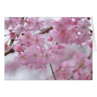 さくら sakura spring 春 グリーティングカード
