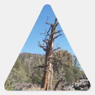 すごい木 三角形シール