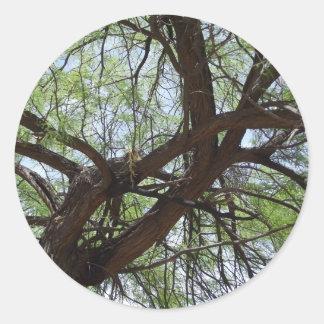 すごいMesquiteの枝 ラウンドシール