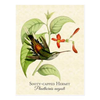 すすけたおおわれた隠者のハチドリのヴィンテージの芸術 ポストカード