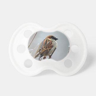 すずめ鳥動物自然 おしゃぶり