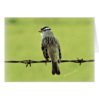 """すずめ""""ワイヤーの鳥"""" カード"""