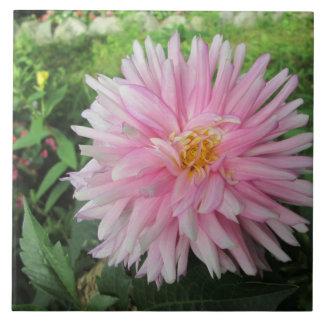 すばらしいピンクのダリアの花 タイル
