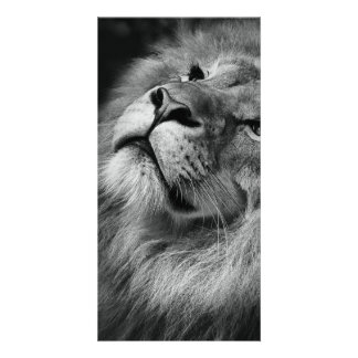 すばらしいライオン カード