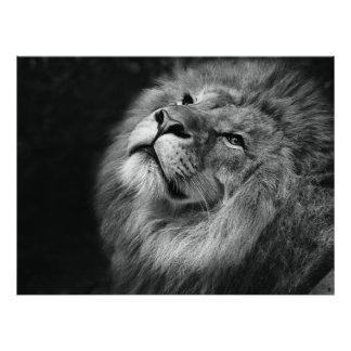 すばらしいライオン フォトプリント