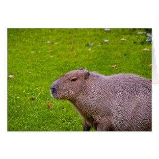 すばらしい動物のカピバラ カード