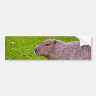 すばらしい動物のカピバラ バンパーステッカー