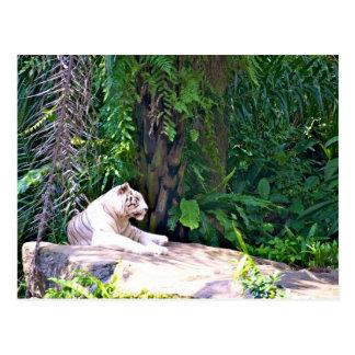 すばらしく素晴らしく白いトラ ポストカード
