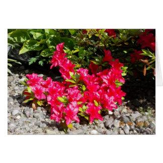 すべての目的のための花の写真の挨拶状 カード