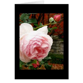 すべての行事カード~のRoses~の花の芸術の写真撮影 カード