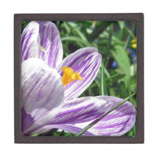 すみれ色の春のクロッカス ギフトボックス