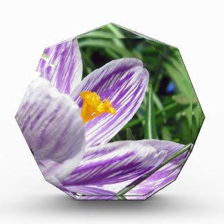 すみれ色の春のクロッカス 表彰盾