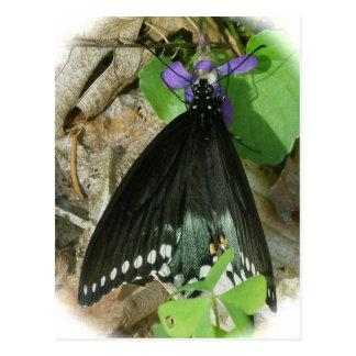 すみれ色の郵便はがきのSpicebushのオスの蝶 ポストカード