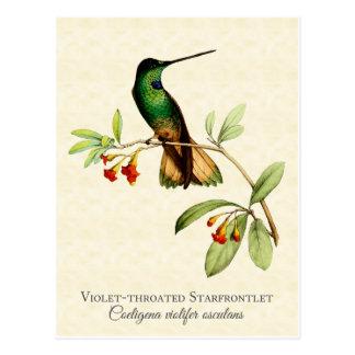 すみれ色のThroatedハチドリのヴィンテージの芸術 ポストカード