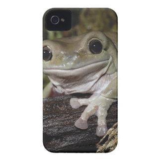 ずんぐりしたアマガエル。 微笑のカエル。 Litoria caerulea. Case-Mate iPhone 4 ケース