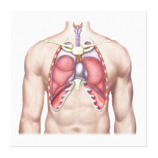 そのままで人間の肺の解剖学 キャンバスプリント