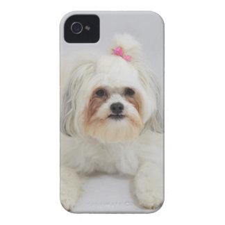 それのピンクの弓が付いているbichonのfriseは毛です Case-Mate iPhone 4 ケース