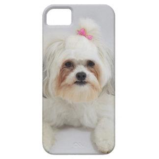 それのピンクの弓が付いているbichonのfriseは毛です iPhone SE/5/5s ケース