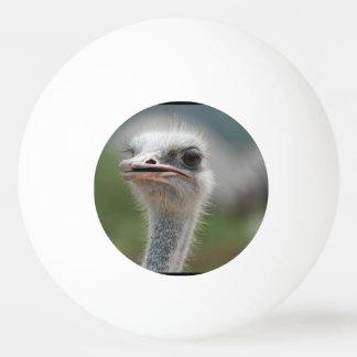 だちょうの鳥 卓球ボール