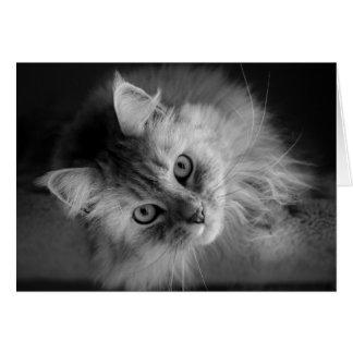 ちょうどカードで点検する猫の鳴き声、 カード