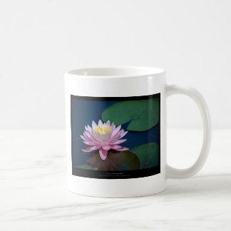 ちょうど花-ピンクの《植物》スイレンの花008 コーヒーマグカップ