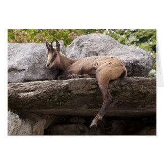 ちょうどChillinのスイス人のChamoixのリラックスさせるなヤギ カード