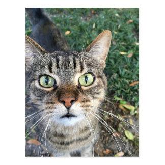 """""""ちょっと""""この猫を言います ポストカード"""
