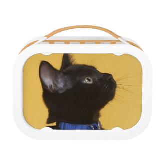 つばの黒い子ネコ ランチボックス