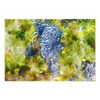 つる植物の赤ワインのブドウ フォトプリント