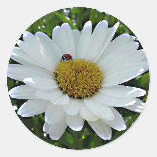 てんとう虫を持つ白いデイジーの写真が付いているステッカー ラウンドシール