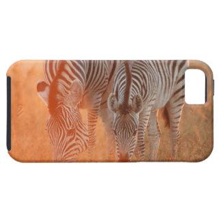 で牧草を食べているBurchellのシマウマ、Equusのburchelli iPhone SE/5/5s ケース