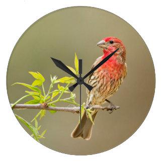 とまるメキシコマシコ(Carpodacus Mexicanus)の男性 ラージ壁時計