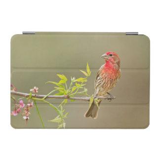 とまるメキシコマシコ(Carpodacus Mexicanus)の男性 iPad Miniカバー