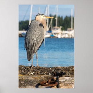 とまるPoulsboの素晴らしい青鷲 ポスター