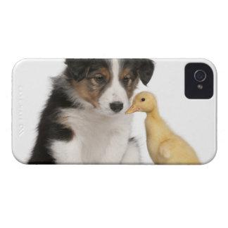 と遊んでいるボーダーコリーの子犬(6週古い) Case-Mate iPhone 4 ケース