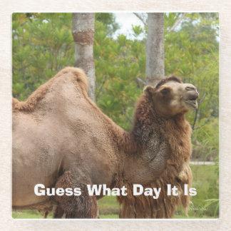 どんな日をそれがラクダのおもしろいな引用文であるか推測 ガラスコースター