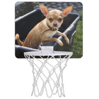 ぬれたチワワの子犬 ミニバスケットボールゴール