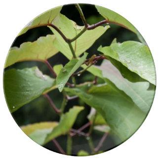 ぬれた緑の葉 磁器プレート