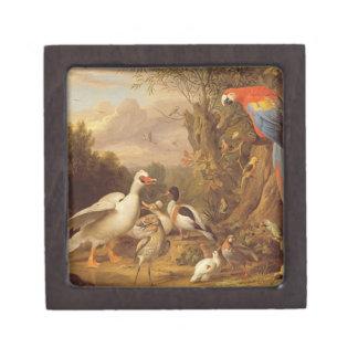 のコンゴウインコ、アヒル、オウムおよび他の鳥土地 ギフトボックス