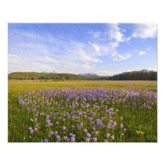 のペンステモンの野生の花の草原 フォトプリント