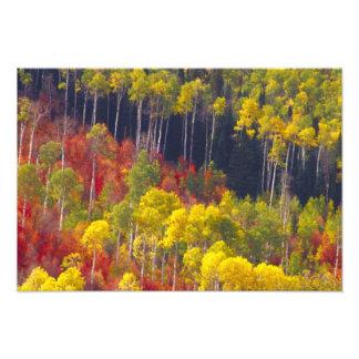 のローガン渓谷ユタのカラフルな《植物》アスペン フォトプリント