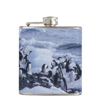 の中のアデリーペンギンのPygoscelisのadeliae) フラスク