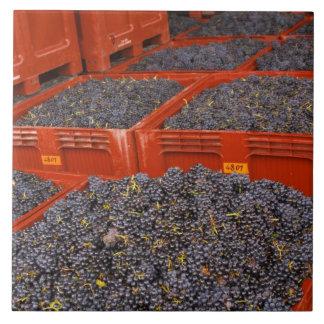 の収穫からのGamayのブドウちょうど タイル