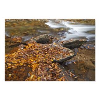 の姿見の入り江に沿う紅葉 フォトプリント