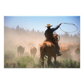 の群れを働かせているカウボーイ牛 フォトプリント